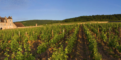 Fifth edition of the international Conference Series on Wine Active Compounds (WAC) 2020
